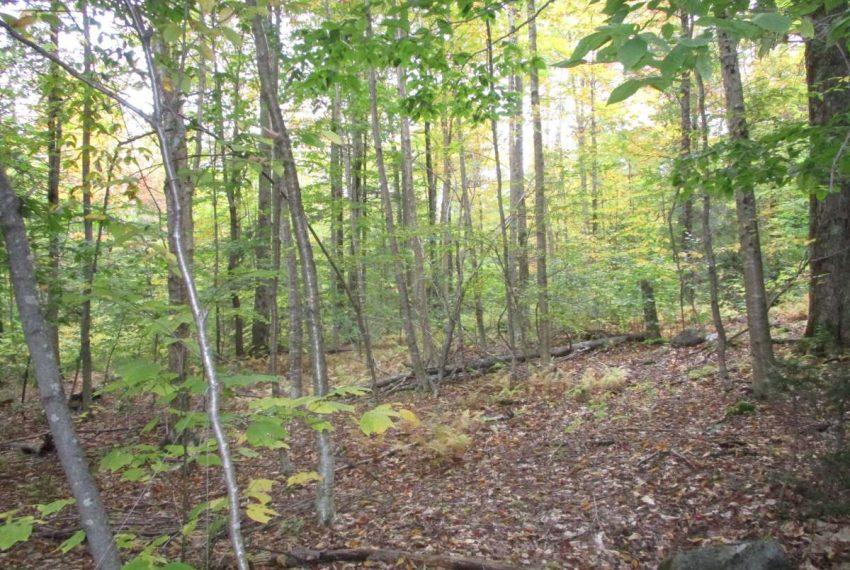 Managed woodlot area