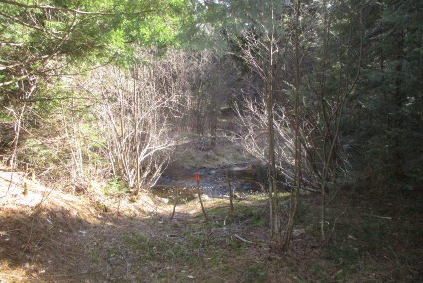 Woods road crosses brook
