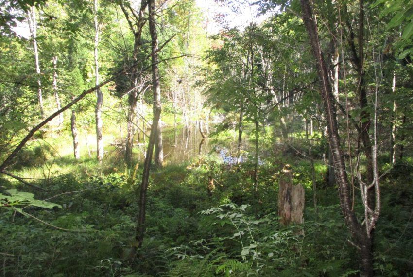 portion of pond on Lot D