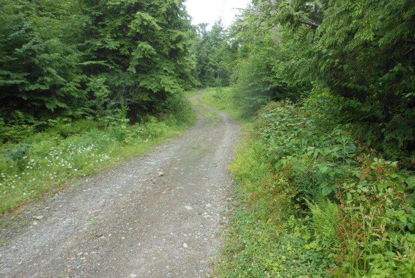 woods road onto land