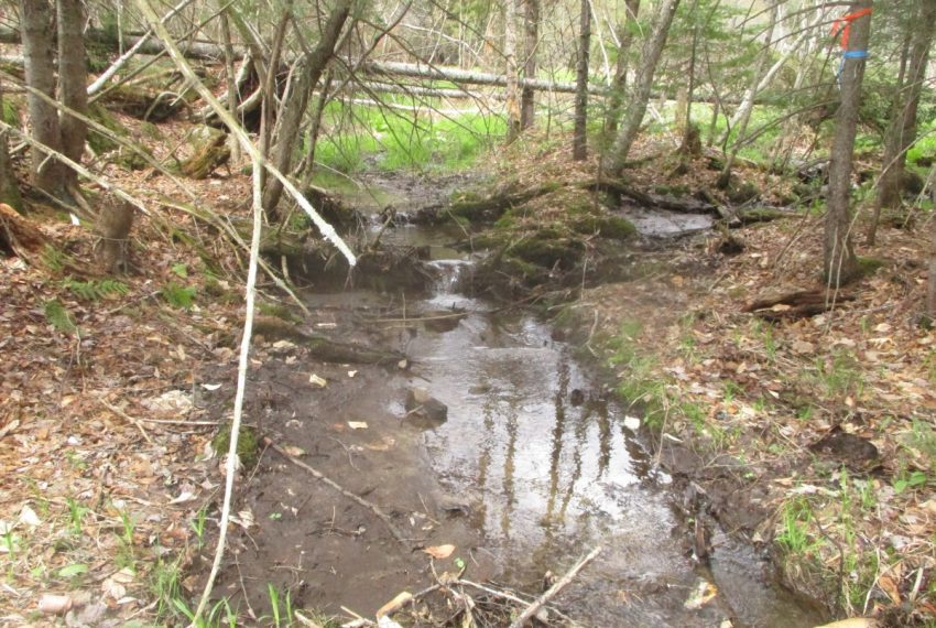 meandering small brook at back of field